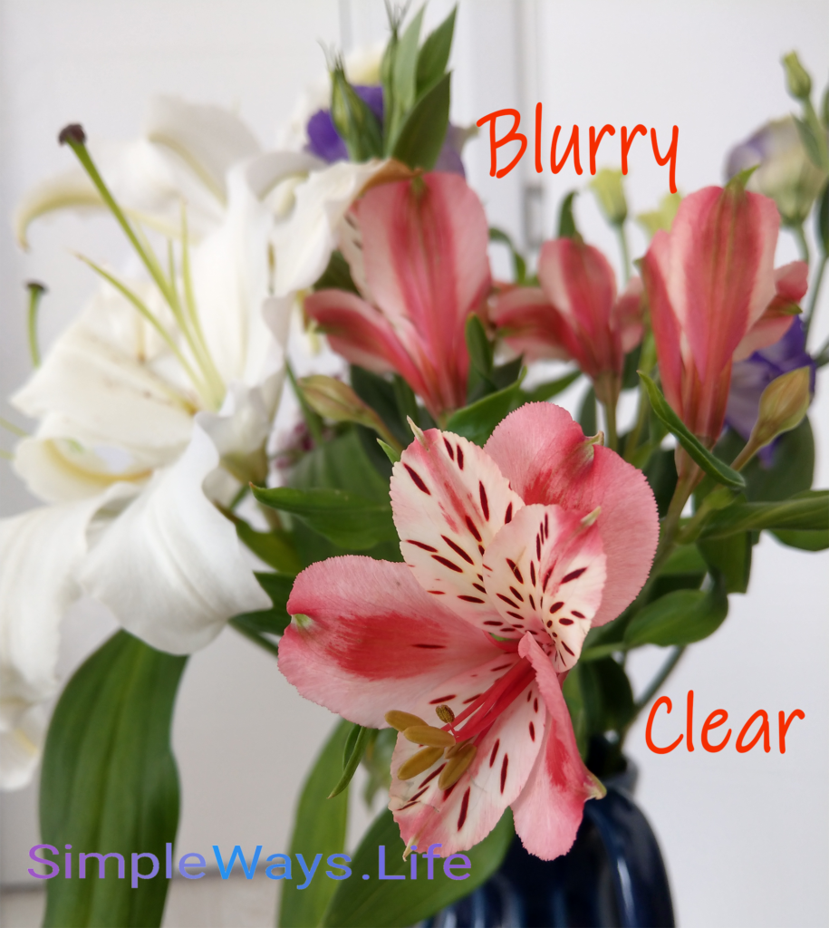 clear-vs-blurry-flowers
